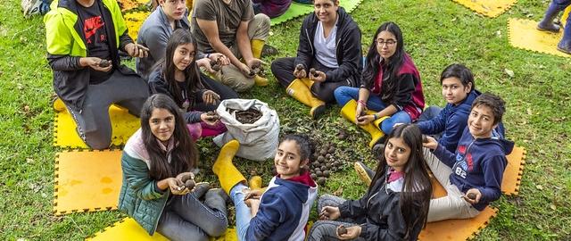 Proyecto Bombas de semilla