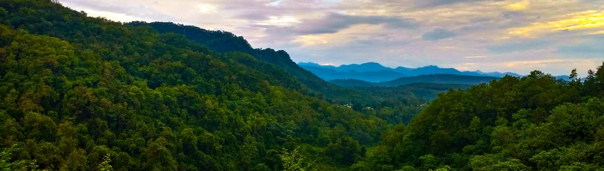Docente de la UTPL es parte de estudio mundial sobre los bosques