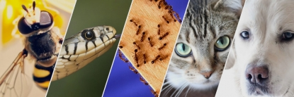 Investigación UTPL analiza animales que pueden predecir sismos