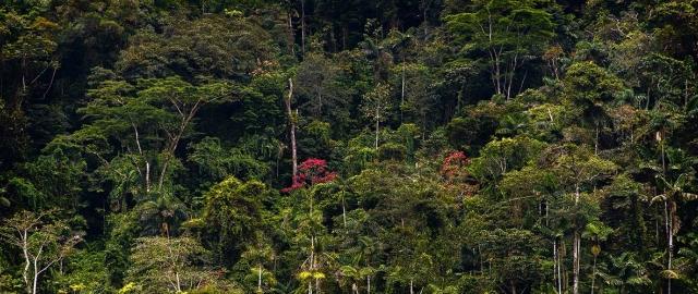 Aspectos ambientales, políticos y sociales de los incendios en la Amazonía