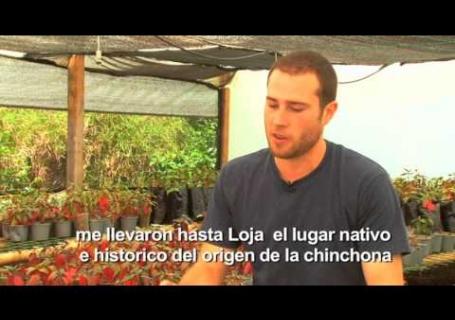 Programa de Conservación y Utilización de Chinchona officinalis (la cascarilla) en la región.